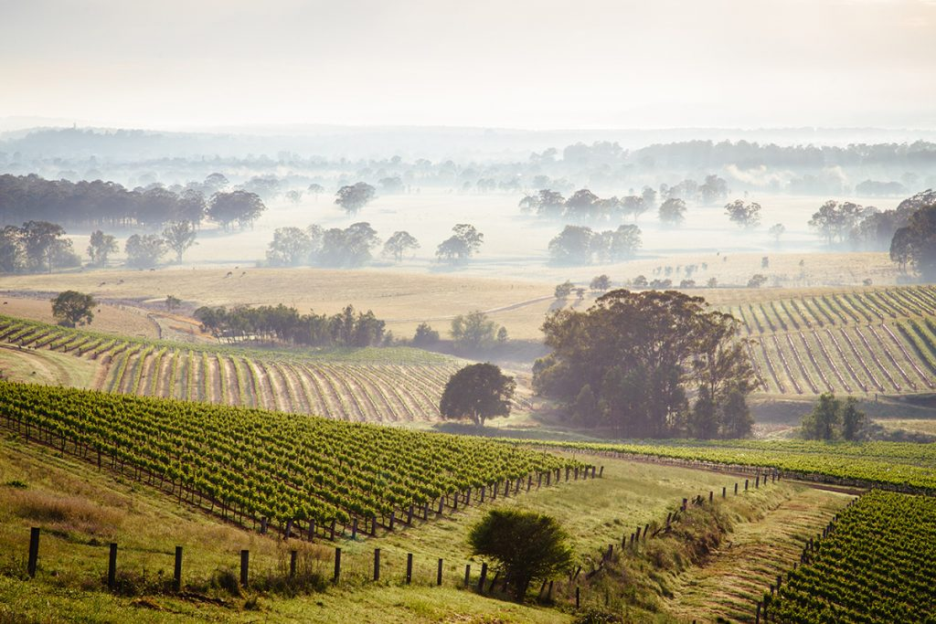 Mist over the Hunter Valley